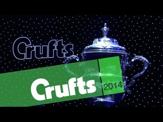 Crufts: The Agility Experience