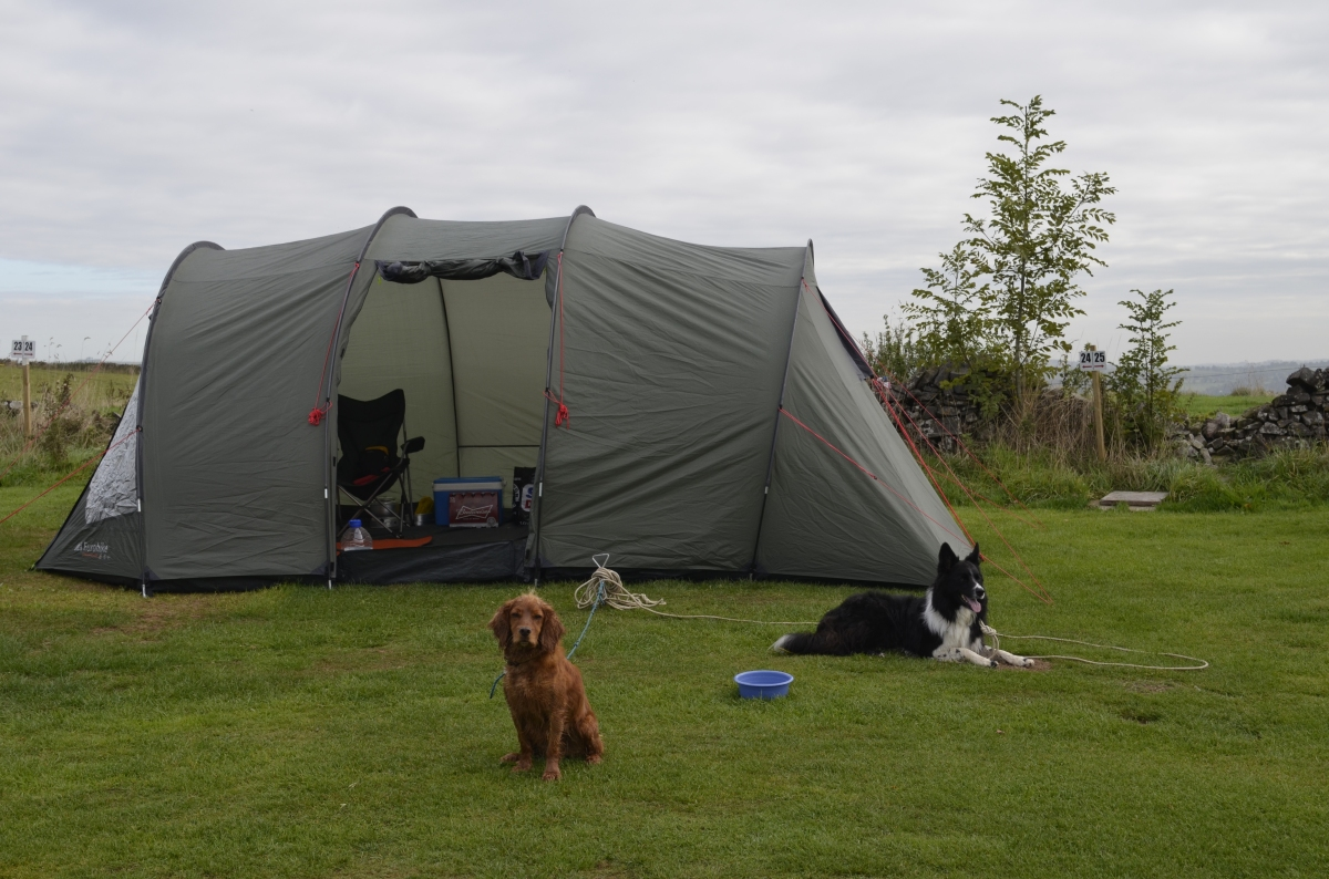 How to survive camping with your dog