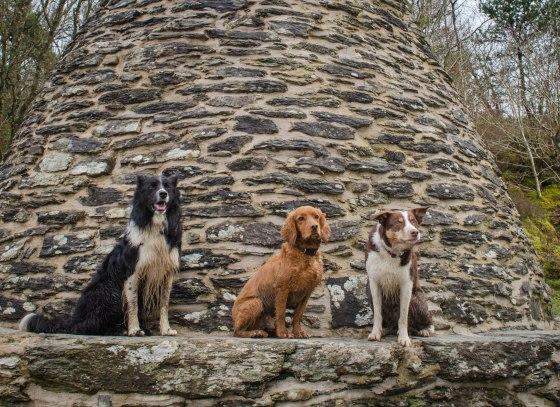 Guinness, Freddie & Red