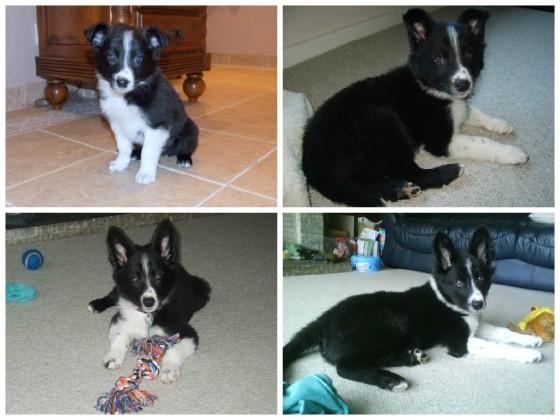 He grew into those ears eventually