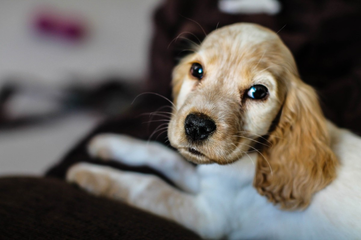 Guest Post - 3 things I've learnt since getting a new puppy