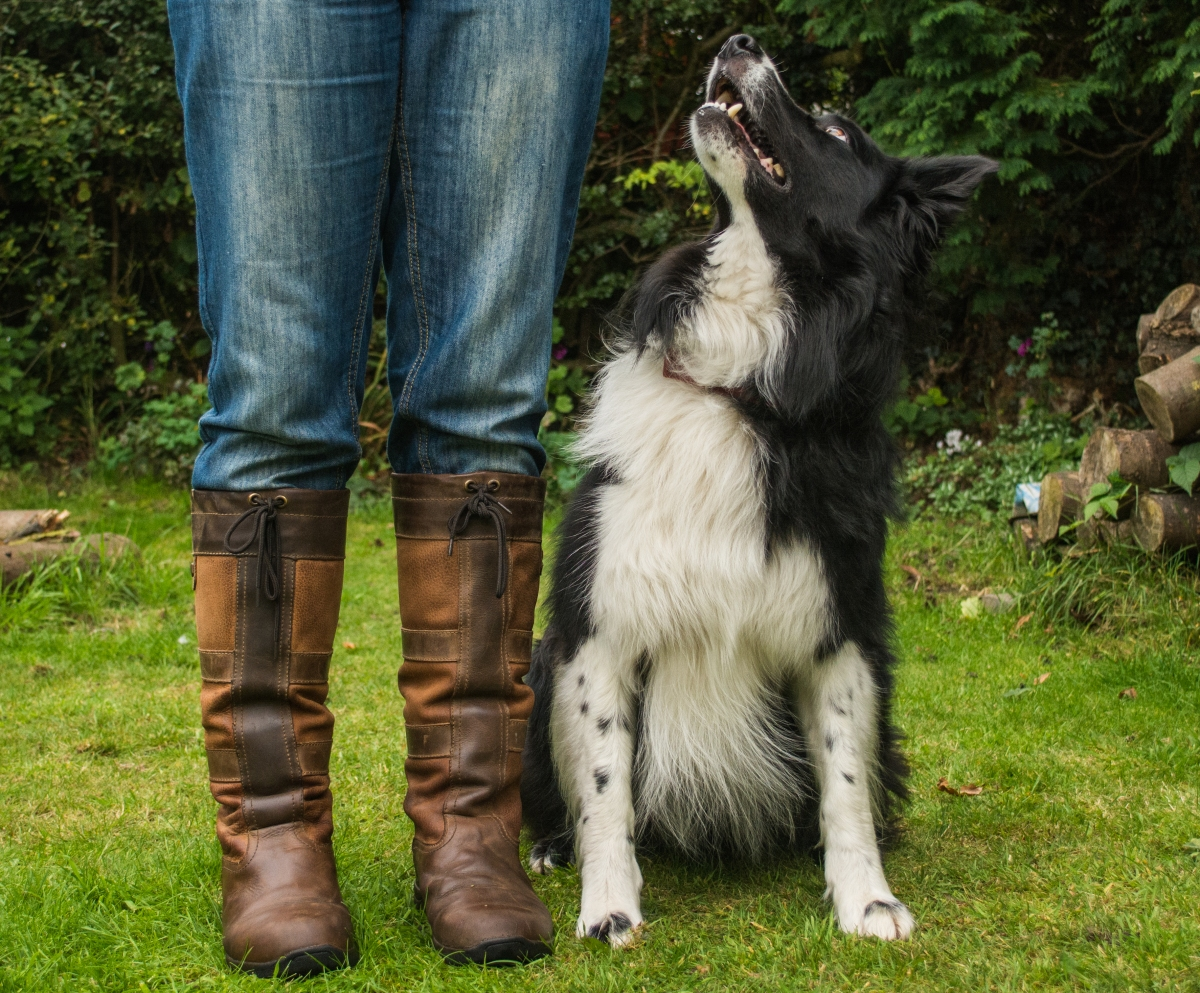The best shoes for a dog owner