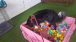 Dog Walks Cheshire Sandbach